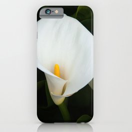 Calla Lily in Bloom iPhone Case