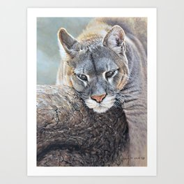 Just Chillin - Cougar Painting by Alan M Hunt Art Print