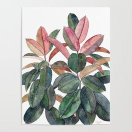 Rubber Plant Poster