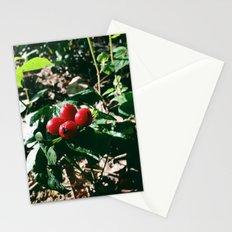 Spider Fruit Stationery Cards