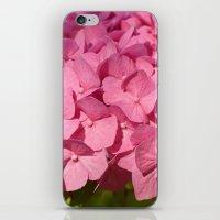 hydrangea iPhone & iPod Skins featuring Hydrangea by Susann Mielke