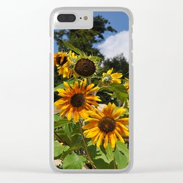 Sunflowers nature Flowers Clear iPhone Case