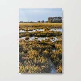 Marsh in the Morning Light Metal Print