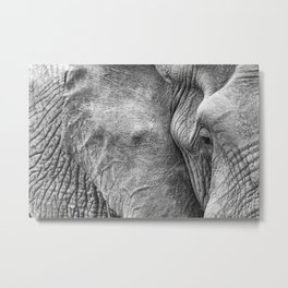 Eye of the elephant Metal Print