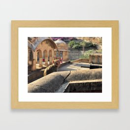 Basking in the Sun at the Monkey Temple Framed Art Print