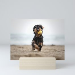 Little dog on the beach catching a yellow ball Mini Art Print