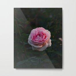 Flower Photography by Sergey Litvinenko Metal Print