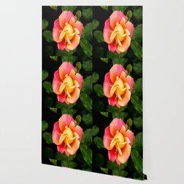 Polynesian Punch Rose Wallpaper