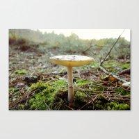mushroom Canvas Prints featuring Mushroom... by belkat