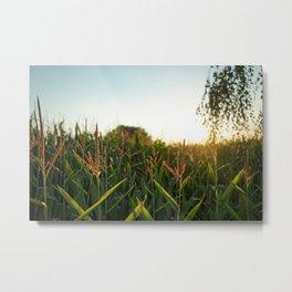 Cornfield Sunset Metal Print