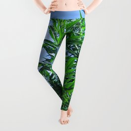 CannaBliss Leggings
