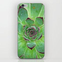 Succulent Love iPhone Skin