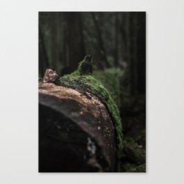 Dark Forest Canvas Print