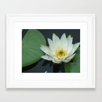 rileigh smirl Framed Art Prints featuring Water Lilly by Rileigh Smirl