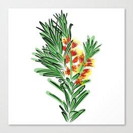 Beautiful Australian Native Bottlebrush Flower Canvas Print