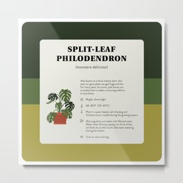 Split-Leaf Philodendron Care Metal Print