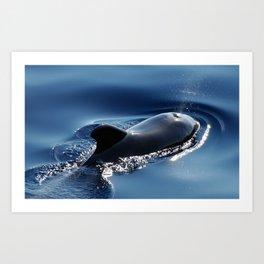 Pilot Whale Spewing Water Art Print