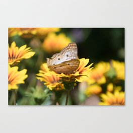 White Peacock Butterfly on Flower Canvas Print