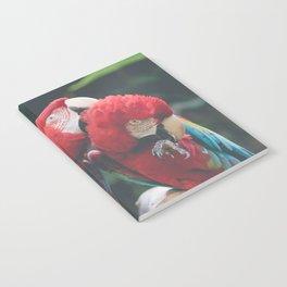 Morning Birbs Notebook