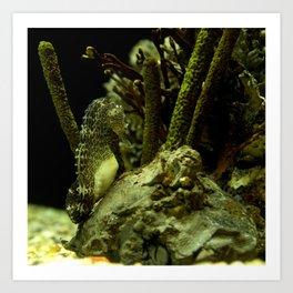 Aquatic Steed Art Print