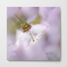 magic of spring Metal Print