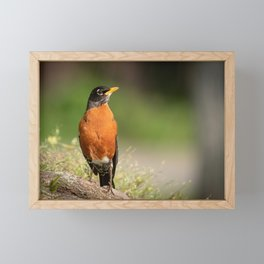 Regal Robin Framed Mini Art Print