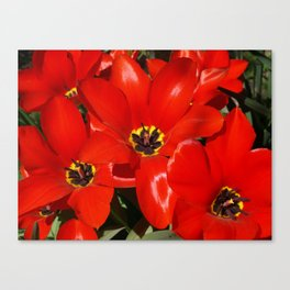 Seductive Red Canvas Print
