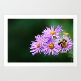 Bee Vibrant Beautiful Purple Flowers Art Print