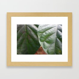 Thrive in the forest of Hawaii Framed Art Print