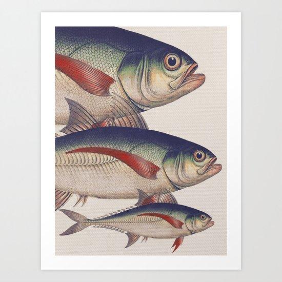 Fish Classic Designs 5 Art Print