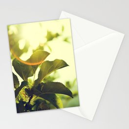 Morning Light Shining Through Branches Of Leaves Nature Photography Stationery Cards