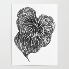 Leaf in Graphite Poster