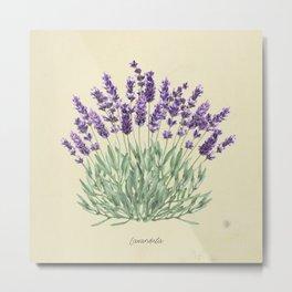 Vintage botanical print - Lavender Metal Print
