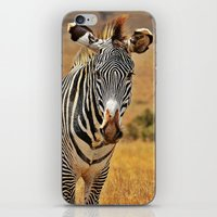 zebra iPhone & iPod Skins featuring Zebra by minx267