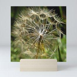 Tragopogon Wildflower Salsify Mini Art Print