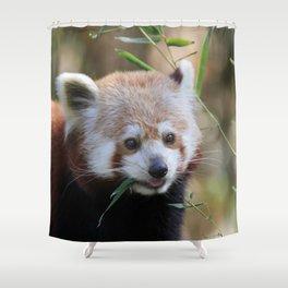 Red_Panda_2015_0310 Shower Curtain