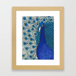 Peacock Pride Framed Art Print