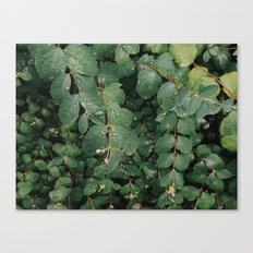 Spring Dew Drops Canvas Print