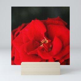 Red Rose Flower Close up Mini Art Print