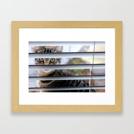Mystery Cat Framed Art Print