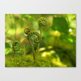 Mushroom In The Ferns... Canvas Print