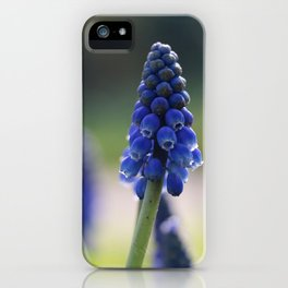 Blue spring - hyacinths in Manchester, England iPhone Case