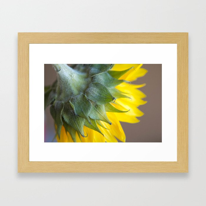 Ray, A drop of golden sun Framed Art Print