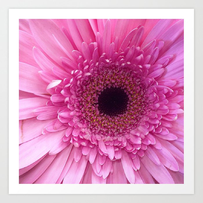 Spectacularly Pink Art Print