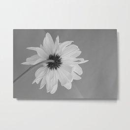 Pensive Daisy (Black & White) Metal Print