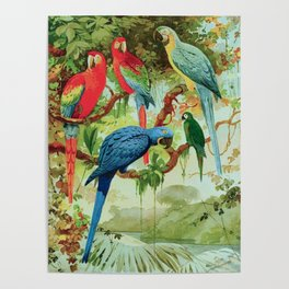 Amazonian Birds August Belem Brazil Colorful Tropical Birds Scientific Illustration Parrots Poster