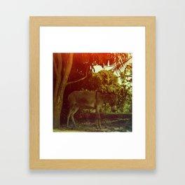 Egyptian Donkey Framed Art Print