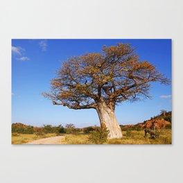Baobab in the autumn, Africa wildlife Canvas Print