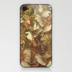Red-Throated, Black-capped, Spotted, Barred iPhone & iPod Skin