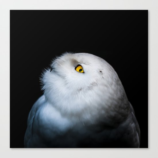 Winter White Snowy Owl Canvas Print